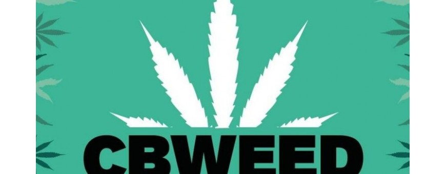Cbweed Cannabis legale Smo-kingshop.it